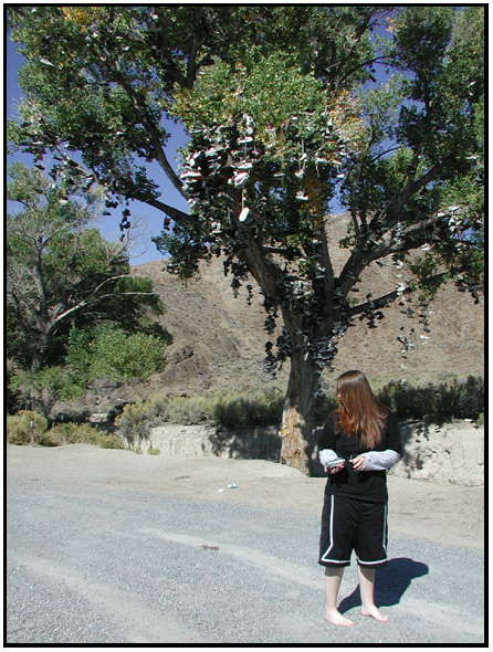 Tree Shoes Nevada Shoe Tree Highway 50 Nevada